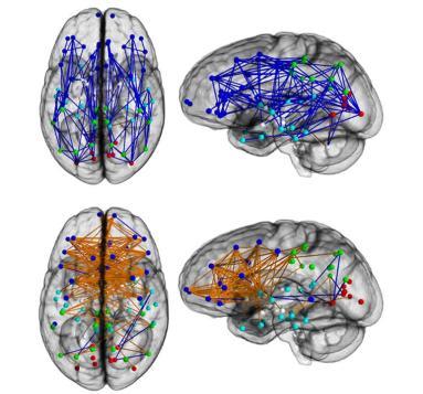 רשתות המוח מראות קישוריות מלפנים לאחור ובתוך המיספרה אחת בזכרים (למעלה) ומשמאל לימין בנקבות (למטה). קרדיט: Ragini ורמה, Ph.D., האקדמיה הלאומית למדעים